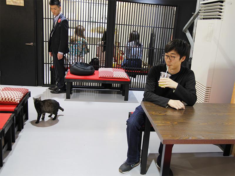 ▲柵で仕切られたスペースに、お茶屋さんがあり、ねこを眺めながら休憩することもできます。